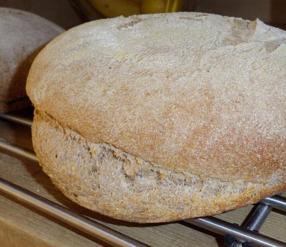 Warum Wird Mein Brot Zu Einem Pilz Brotbackforum Die